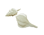 Fine Bone China Rose Murex & Spindle Shell Set/2 (White)